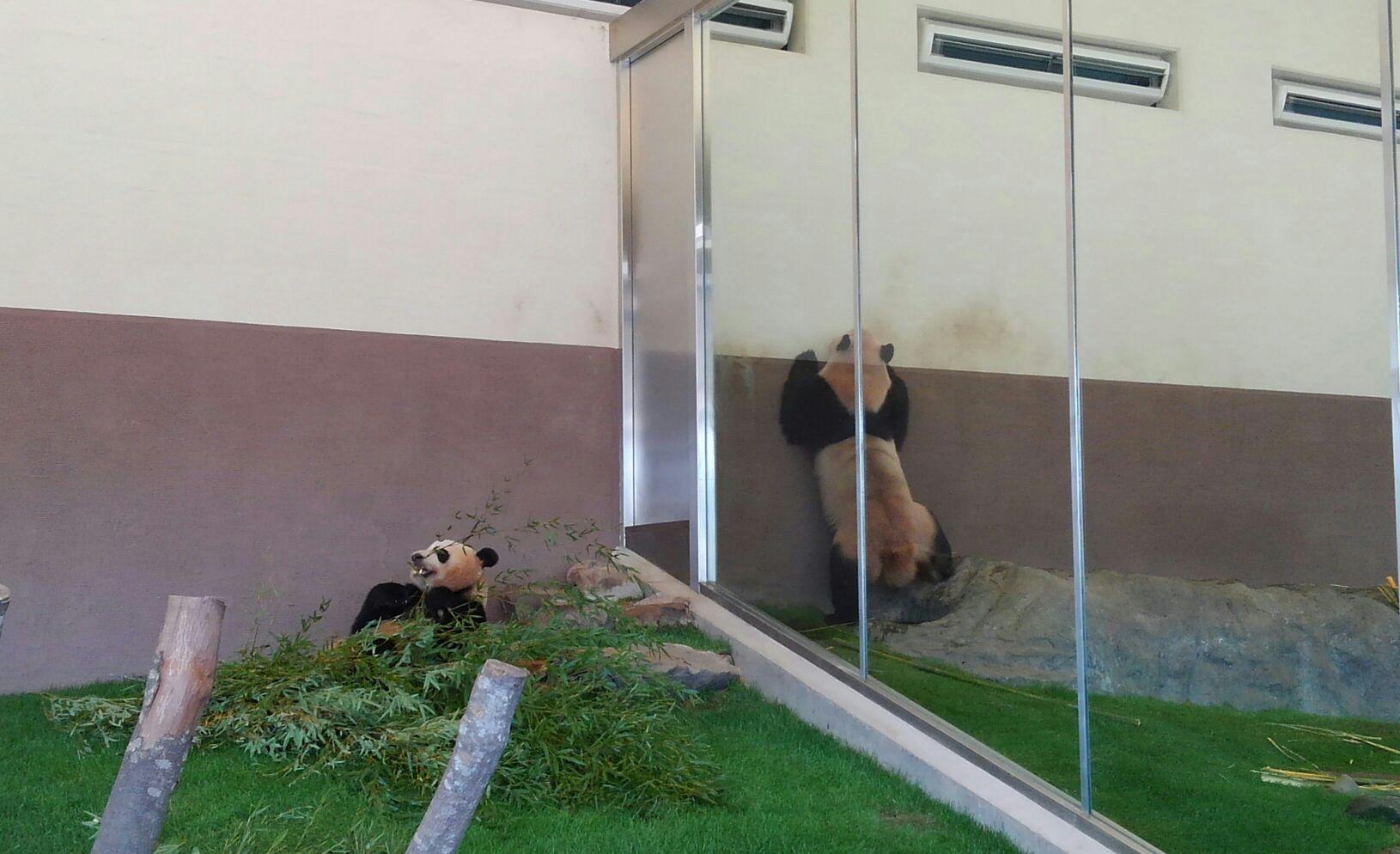 旅の写真 パンダ。